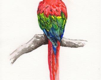 "Original watercolor painting (watercolor) ""Pretty Parrot"""