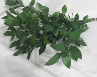 Israeli Ruscus, Fresh Israeli Ruscus, Fresh Greenery, Bulk Israeli Ruscus, DIY Wedding Flowers, DIY Greenery, DIY Bouquet