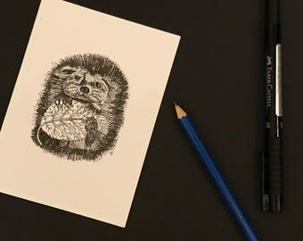 Just Quillin-blank hand sketched hedgehog card