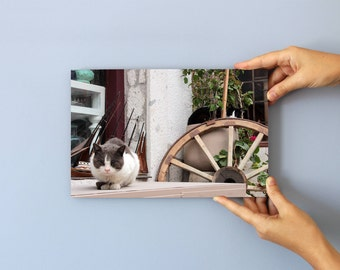 Turkish Cat, Photo on 29x19 cm MDF (Medium-density fibreboard), Wall Art, Home Decor, Limited Edition Photography Prints