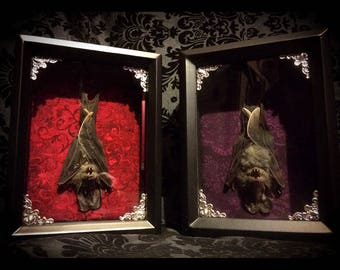 False Vampire Bat Shadowbox - Taxidermy Bat - Gothic Gift - Bat Gift - Gothic Home Decor - Halloween Decoration - Bat Decoration