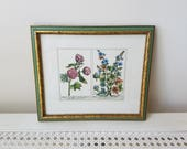 Vintage Botanical Flowers Art Print in Gold & Green Wood Frame, 18th Century Floral Reproduction By W. King Ambler