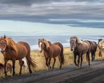 Iceland,Icelandic Horses,Horse,Beach,Oversize,Wall Art, Home Decor,Canvas Photography,Blue