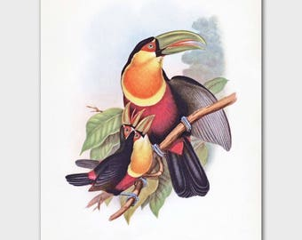 Toucan Art (Tropical Home Decor, Office Wall Art, Gift for Him) --- 19th Century John Gould Artwork