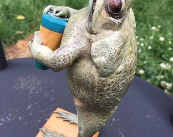 RARE Vintage Collectible Unique Oddity Taxidermy Stuffed Mexican Toad Frog Playing Bongo Drums