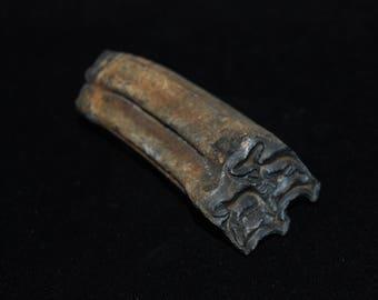 Large Fossilized Pleistocene Equus Horse Tooth 10,000 - 1.8 million Years