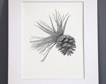 Pinecone, Botanical Art print