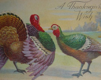 Colorful Tom and Hen Turkeys Antique Thanksgiving Postcard