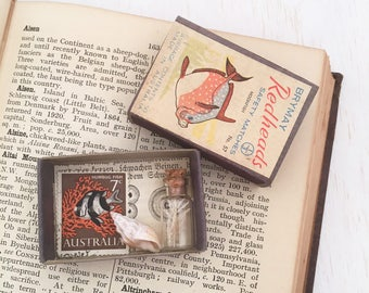 Vintage Curio collection - natural history - stamp - shell - glass seaweed specimen - matchbox assemblage art cabinet of curiosities #0424