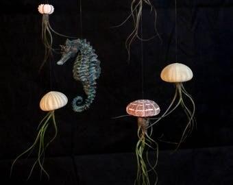 Hanging Seahorse Display
