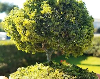 Miniature Tree One