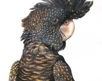 Black Cockatoo art print - Australian Bird giclee Parrot Print, Modern Contemporary Wall Art, Black and Yellow Tropical Art, bird lover gift