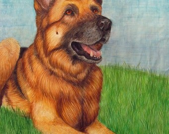 Custom Pet Portrait - Colored Pencil