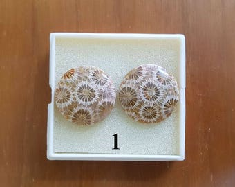 Fossil Coral Pair