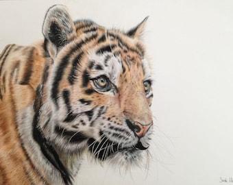 Original Framed Tiger Drawing in Coloured Pencil