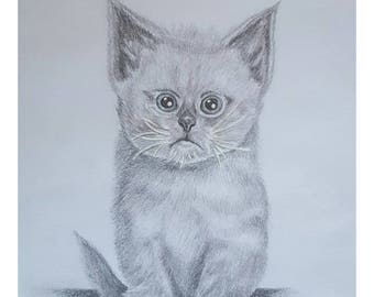 Kitten - Signed Limited Edition A4 Print of an original pencil drawing.