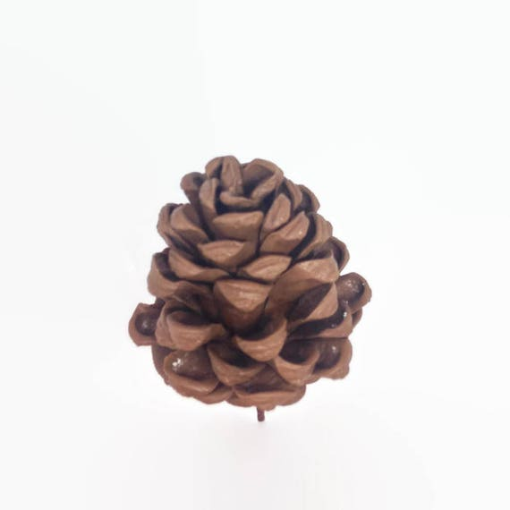 Pinecones Gumpaste Sugar Paste Cake Topper for Rustic Woodland Weddings, birthdays, bridal showers