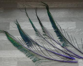 Set of 5 purple dyed Peacock swords feathers