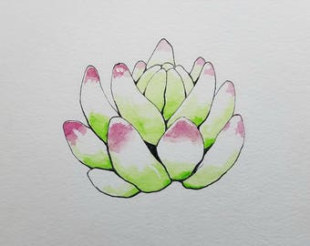 """Succulent Ink and Watercolor Illustration 6"""" x 6"""""""