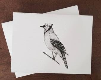 Bird/Blue Jay Stationery