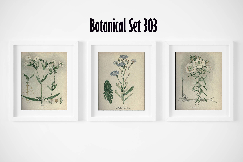 White Flower Print Set Of 3 Botanical Prints Antique