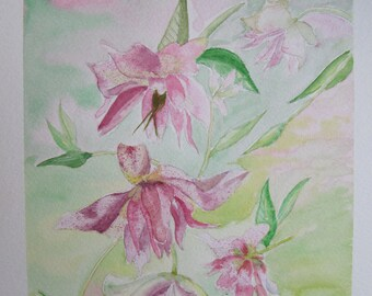 watercolor painting elegant pink hellebores