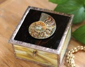 It's All About the Ammonite Square Glass Box