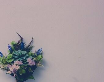 Succulents Serie