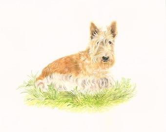 Custom portrait of your dog