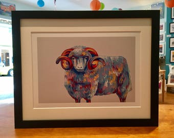 Colourful Highland Sheep Print taken from Acrylic Painting - White or Dove Grey A4 or A3