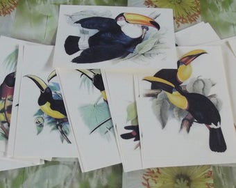 Old engraving original Board posters 54 school Larousse advertising zoology Toucanet Aracari Toucan Toco Toucan bird Theme