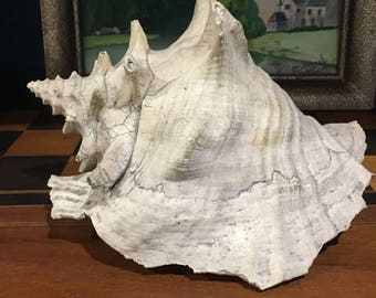 Large old shell