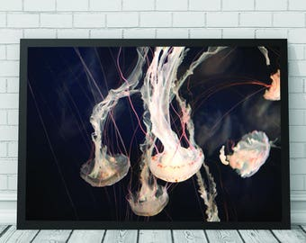 Jellyfish Art Print, Jellyfish, Jellyfish Art, Jellyfish Print, Abstract Art, Printable Digital Download, Photography
