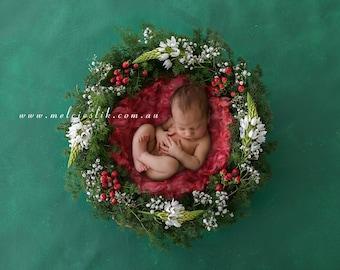 Newborn Digital Background Backdrop Download Christmas
