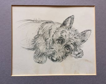 Vintage 20's, 30's Black Scottie Dog Print - of a pencil drawing, 'Hoots, What on earth?...'