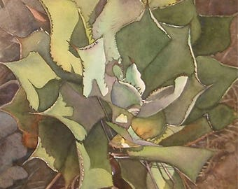 Cactus Botanical original realistic detailed watercolor painting  14.5 x 15  art colllectors and home decor by Phyllis Nathans