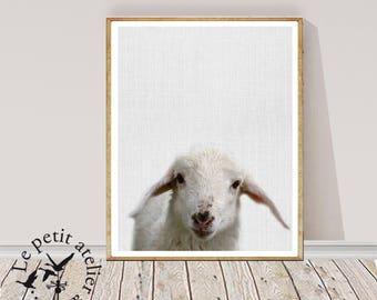 Lamb Print, Baby Sheep Wall Art, Nursery Animal, Digital Download, Farm Decor, Printable Farmhouse Sheep, Large Poster
