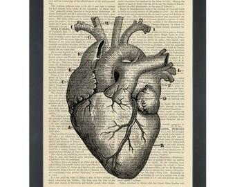 Vintage anatomy drawing Heart Dictionary Art Print