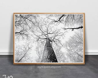Tree Print, Wall Art, Scandinavian Art, Forest Print, Printable Tree, Modern Minimalist Wall Art, Black and White, Photography, Birch Tree