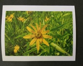 Nature Photo Card - Yellow Flower