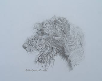 "Pencildrawing Irish Wolfhound Original no Fine Art Print 11,6 x 15,3"""
