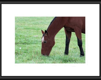 Grazing Horse, Photography, Free Shipping, Print, Framed Print, Canvas Wrap, Canvas with Floating Framed, Wall Art, Home Decor, Nature Pic