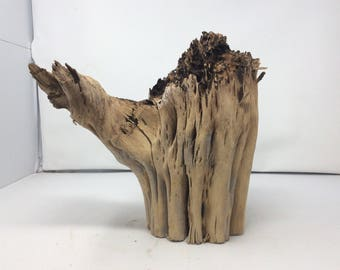 Small, Cleaned Saguaro Root Base