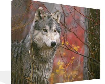 Lone Red Wolf Looking Canvas Print  Wall Art Ready To Hang Or Poster Print