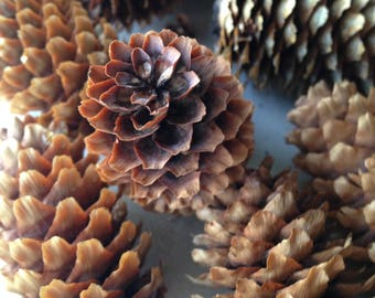 Pine Cones // Craft Supply // Holiday Decoration // Christmas // Wreath // Bulk lot of 20 Pine Cones //