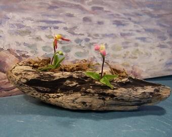 Driftwood orchids - driftwood art - driftwood collectable - driftwood sculpture - collectable gift - contemporary art