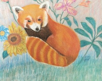 Red Panda Pastel Drawing