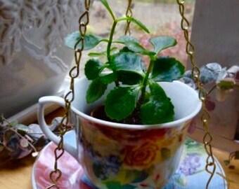 Hanging Floral Teacup Planter