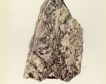 Vintage lithograph of the Sylvanite or silver gold telluride from 1968