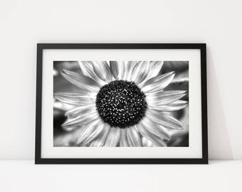 Black and White Photo, Black and White, Wall Art, Printable, Printable Art, Instant Digital Download, Sunflower Photo, Flower Photo
